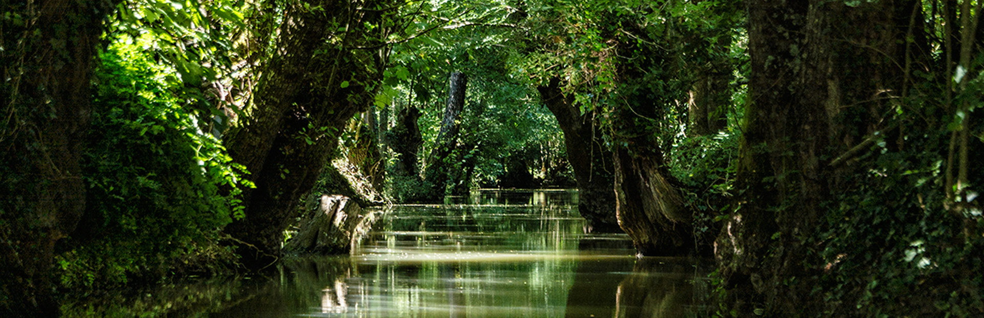 promenade en barque marais poitevin arcais